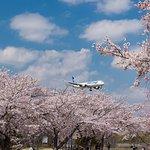 Photo of Sakura no yama Park