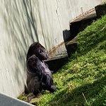 Billede af Jersey Zoo