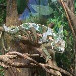 Hartley's Crocodile Adventures Foto