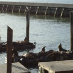 Sea Lions at the Bay.