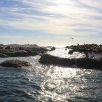 Sea lions - Hout Bay