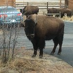 Foto de Zion Mountain Ranch