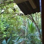 Photo of Jungle Beach Hotel at Manuel Antonio