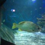 Aquarium of Niagara Foto