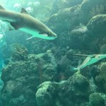 The Florida Aquarium Foto
