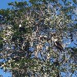 Frigate birds, I think...
