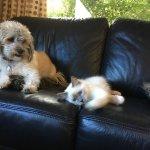 Poppy & Kiko our resident pets