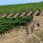 Cycling IN the Vineyards - A guided bike tour that takes you off-road through the vineyards
