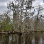 Jean Lafitte Swamp Tours Foto