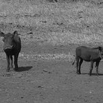 Tsavo east and Taita Hills