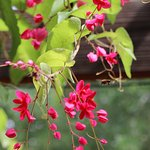 Foto de Tucson Botanical Gardens