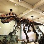Foto de American Museum of Natural History