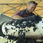 Learn about wine-making and how our grapes are hand-sorted