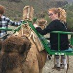camel fun