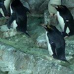 Foto de Tennessee Aquarium