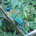 Foto de Go Tours Costa Rica - Day Tours