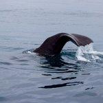 Foto de Whale Watch