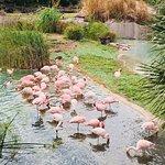 Photo of Busch Gardens