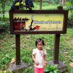 World of parrots