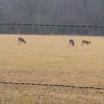 deer in the grassland