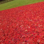 Hand made poppy field, Remembrance day 2017