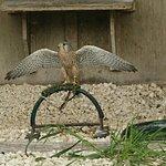 Malta Falconry Centre照片