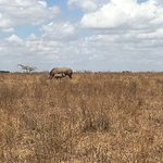 Photo of Nairobi National Park