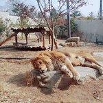 صورة فوتوغرافية لـ Jeonju Zoo