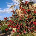 Photo of Three Corners Fayrouz Plaza Beach Resort
