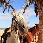 Foto di Hilton Los Cabos Beach & Golf Resort
