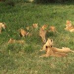 andBeyond Ngorongoro Crater Lodge Foto