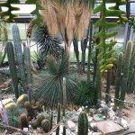 Foto de Botanischer Garten Berlin