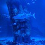 SEA LIFE London Aquarium Foto
