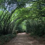 Parque municipal de Maceio Photo