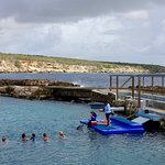 Photo of Dolphin Academy Curacao