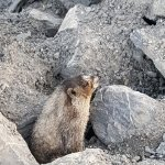 Valdez wildlife!