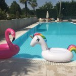 Meet flamingo, unicorn and pool!