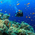 South Sinai - Red Sea Diving
