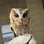 a visitor from the owl sanctuary