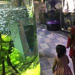 Foto de Dubai Aquarium & Underwater Zoo