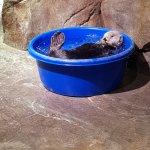 Ice bucket challenge :)