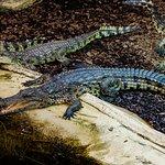 Crocs of the world