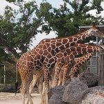 Photo de Zoo Miami