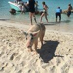 pig beach