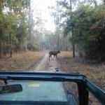 Jeep Safari from the lodge