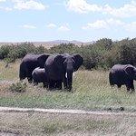 Keekorok Lodge-Sun Africa Hotels Foto