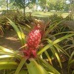 Photo of Tropical Fruit Farm