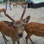 Foto van Nara Park