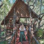 Foto de Jaci's Tree Lodge