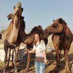 Emirates Tours and Safaris Foto